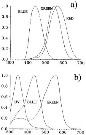 Comparaison du spectre des récepteurs de l'humain (a) et de l'abeille (b).