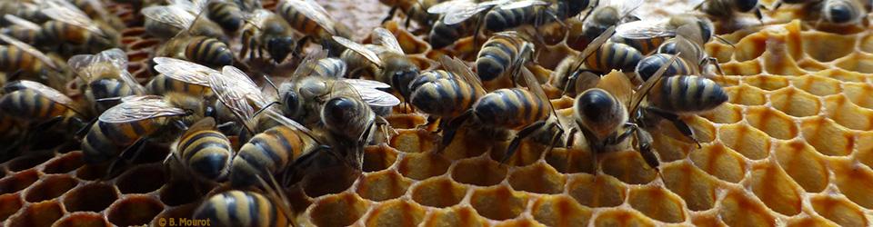 abeilles@home